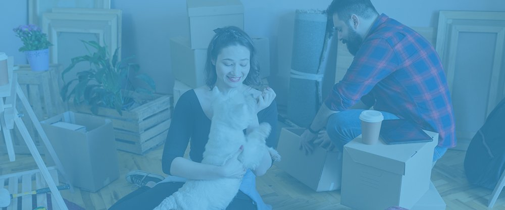 What Should You Know About a Pet Move?